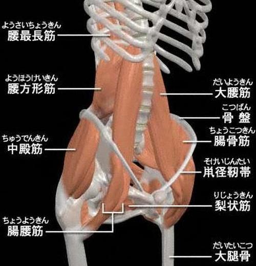 腸腰筋.png